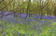 Bluebells at Stanmer Park