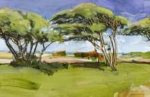 Coastal Trees, Isle of Wight